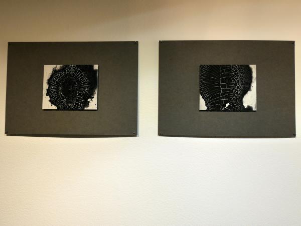 photogrammes Isabel